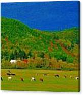 Out Standing In Their Field Canvas Print