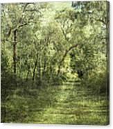 Outback Bush Canvas Print