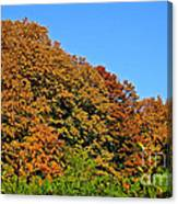 Over The Hedge Canvas Print