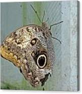 Owl Butterfly Canvas Print