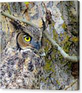 Owl Eye Canvas Print