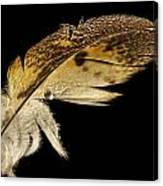 Owl Feather With Water Canvas Print