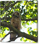 Owl In Central Park Canvas Print