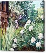 Oxenden Peonies Canvas Print