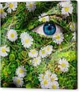Oxeye Daisy Canvas Print