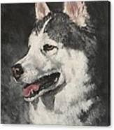 Ozzie Canvas Print