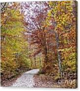 Pachaug State Forest Canvas Print