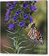 Pacific Grove Monarch Canvas Print