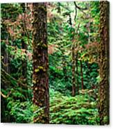 Pacific Rim National Park 14 Canvas Print