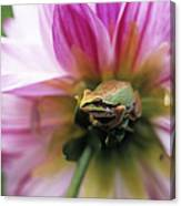 Pacific Treefrog On A Dahlia Flower Canvas Print
