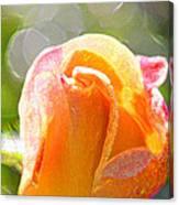 Paint Daub Yellow Rose Canvas Print