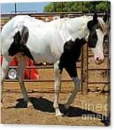 Paint Stallion - Black And White Canvas Print