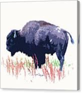 Painted Buffalo Canvas Print