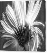 Painted Gerbera Daisy In Black And White Canvas Print