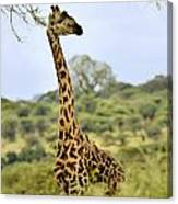 Painted Giraffe Canvas Print