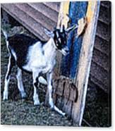 Painted Goat Canvas Print