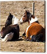 Painted Horses I Canvas Print