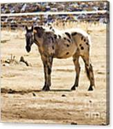 Painted Horses II Canvas Print