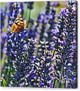 Painted Lady Butterfly On Lavender Flowers Canvas Print