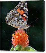 Painted Lady In A Shower Canvas Print