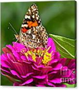 Painted Lady With Zinnia Canvas Print