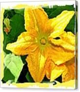 Painted Squash Blossoms Canvas Print