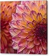 Painted Stacked Dahlias Canvas Print