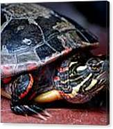 Painted Turtle Michigan Canvas Print