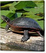 Painted Turtle On Log Canvas Print