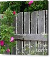 Painterly Fence And Roses Canvas Print