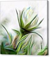 Painterly White Roses Canvas Print