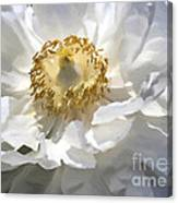 Painting of a white flower canvas print canvas art by jerry l barrett painting of a white flower canvas print mightylinksfo
