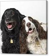 Pair Of Canine Friends Canvas Print
