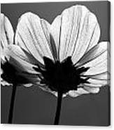Pair Of Cosmia Flower Canvas Print