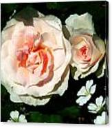 Pale Pink Roses In Garden Canvas Print