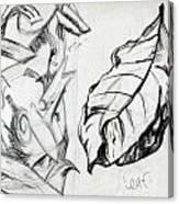 Palm And Leaf Canvas Print