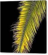 Palm Frond Against Black Canvas Print