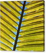Palm Leaf Canvas Print