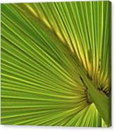 Palm Leaf II Canvas Print