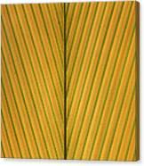 Palm Leaf Showing Midrib And Veination Canvas Print