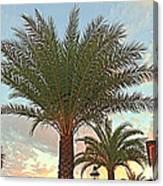 Palm On The Avenida Canvas Print
