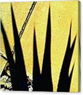 Palm Reader Canvas Print