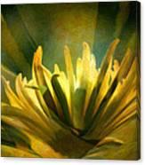 Palm Sunday Canvas Print