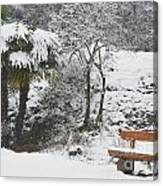 Palm Tree And A Bench With Snow Canvas Print