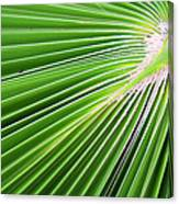 Palm Tree Frond Canvas Print