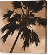 Palm Tree Leeward Oahu Canvas Print