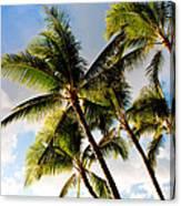 Palm Trees At Twilight Canvas Print
