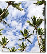 Palm Trees Canvas Print