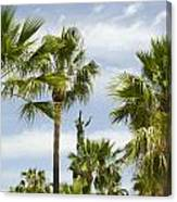 Palm Trees In Spain Canvas Print