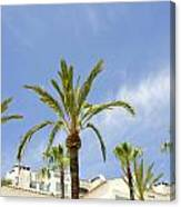 Palm Trees In The Blue Canvas Print